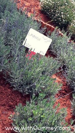 J'ai été au Green Day du Technopark de Casablanca 🌿 + photos du jardin Jnan Tech withoummey.com with oummey (23)